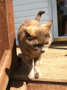 Ugly-Cat on the front porch